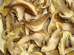 白牛肝菌(干)