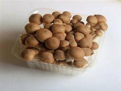 丰科仙菇道蟹味菇