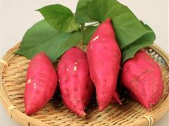 减肥吃红薯 初春瘦身排毒佳品