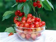 几种水果是排毒的利器 排肠毒少不了几类蔬菜