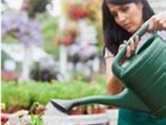 给植物浇水