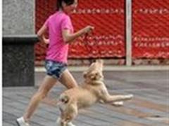 跟动物玩耍(走着/跑着),中等强度