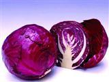 吃紫甘蓝能防衰老抗氧化